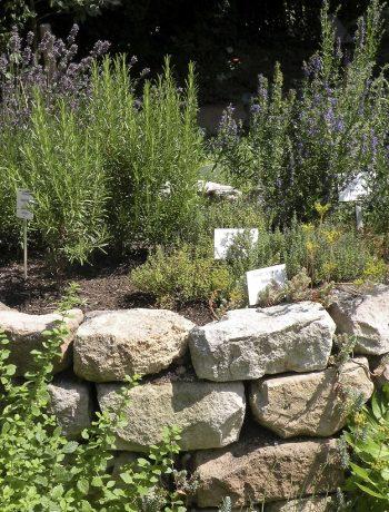 Die richtige Bepflanzung der Kräuterspirale