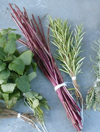 Kräuter sammeln und ernten: Kräuterbuschen binden an Maria Himmelfahrt
