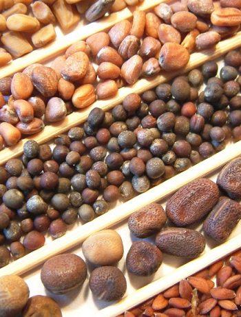 Die besten Adressen, um Pflanzen und Samen alter Kräuter zu kaufen (auch Bio)