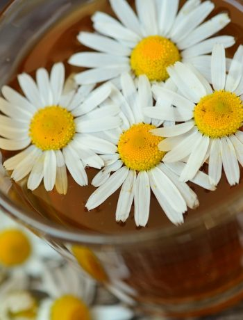 Natürliche Antibiotika: Diese Kräuter und Pflanzen helfen