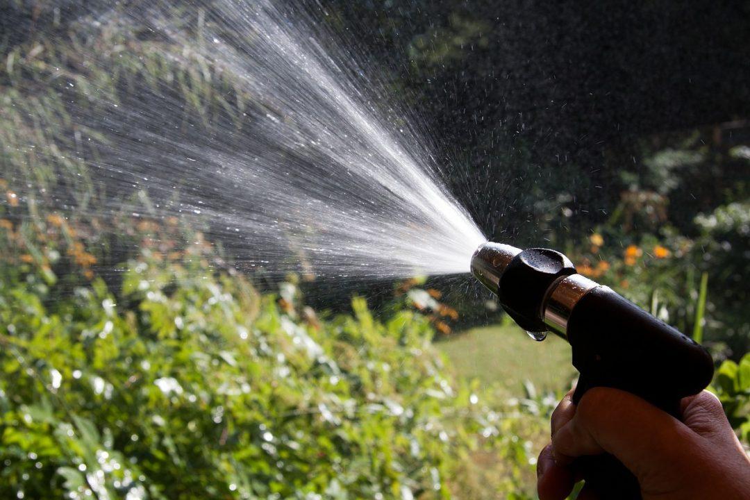 Kräuter und Pflanzen richtig gießen