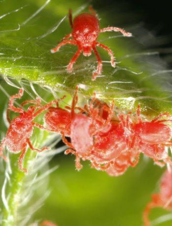 Spinnmilben Hausmittel