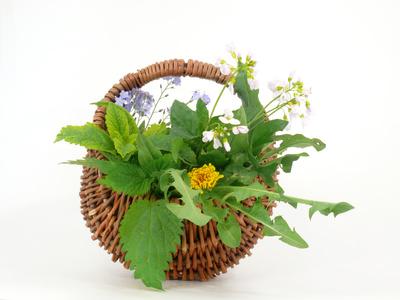 Artikelgebend ist die Wunderpflanze Brennessel.
