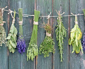 Heilkräuter und Heilpflanzen gegen die Gicht