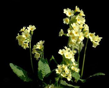 Artikelgebend sind Heilpflanzen gegen WInterkrankheiten.