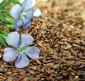 Blüte auf Samen