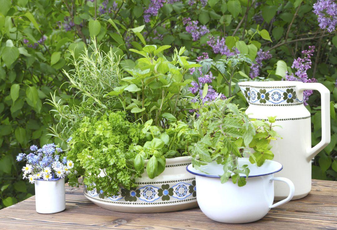 Gartentisch mit Kräutern