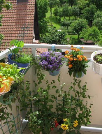 Balkon mit Blumen und Kräutern