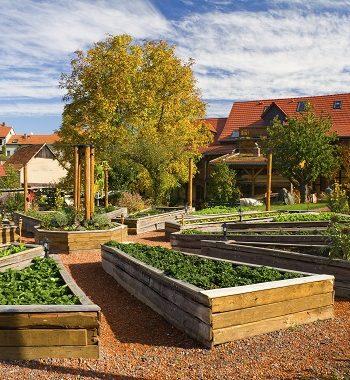 Boden und Standort: So gedeihen Kräuter am besten