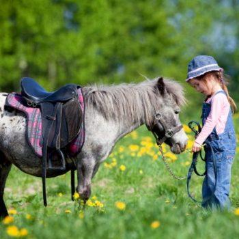 Tierheilkunde: Kräuter für Vollblüter