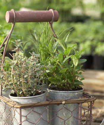 Top-Trend Indoor-Gardening: In der Wohnung gärtnern