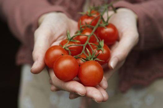 Lecker zusammen mit Kräutern: So ziehen Sie Tomaten selbst
