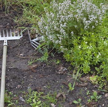 Tipps vom Profi: So kommt auch ein kleiner Garten groß raus