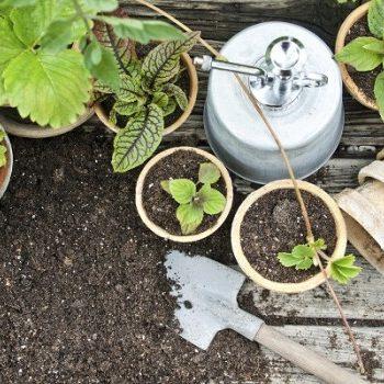 nat rlicher pflanzenschutz das hilft wirklich gegen blattl use. Black Bedroom Furniture Sets. Home Design Ideas