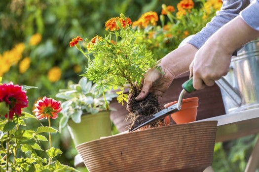 Blumen- und Kräuterampel