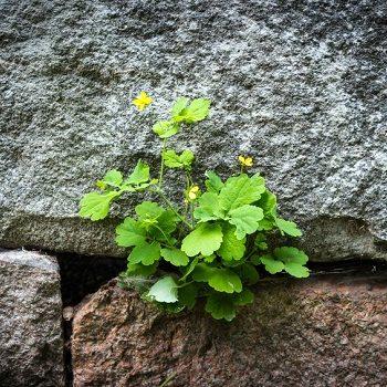 Mit Fug und Recht: So bepflanzt man Fugen