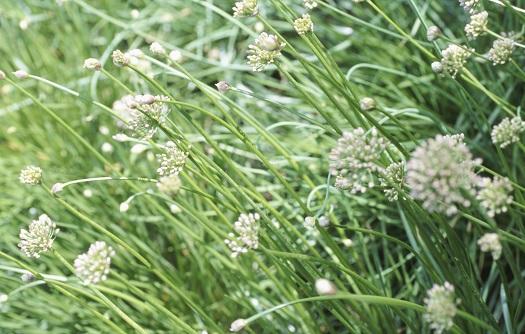 Unkraut ade – Tipps zur Bekämpfung störender Pflanzen