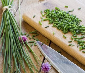 Schnittlauch: Nützliches Küchenkraut