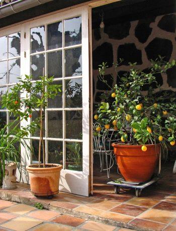 So überstehen Zitruspflanzen den Winter