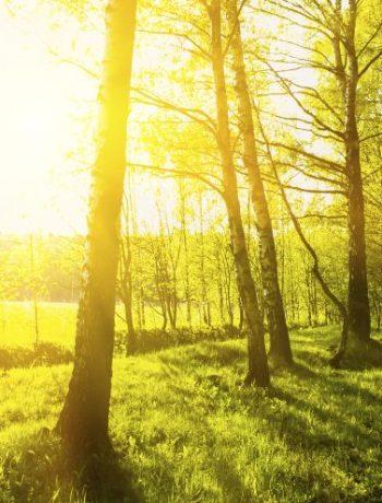 Kreatives Upcycling: Natürliche Deko mit Birkenrinde