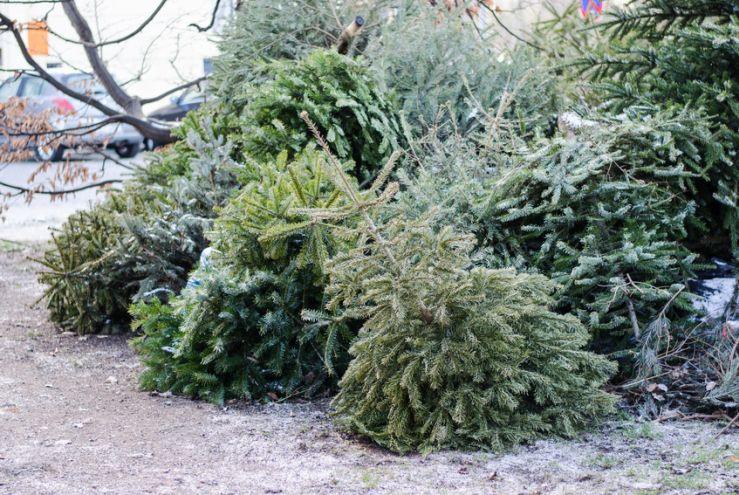 Nach dem Fest: So kann der Weihnachtsbaum noch genutzt werden