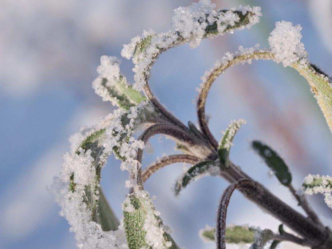 Die besten Tipps für winterharte Kräuter