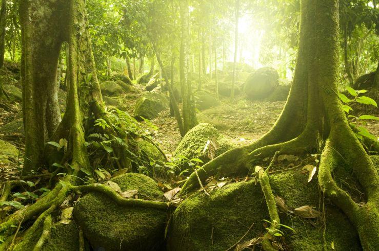 Schlaue Natur: Wie intelligent sind Pflanzen wirklich?