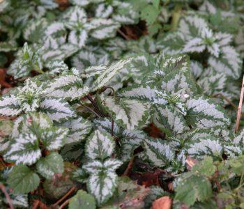 Diese Pflanzen bringen Schattenplätze zum Strahlen
