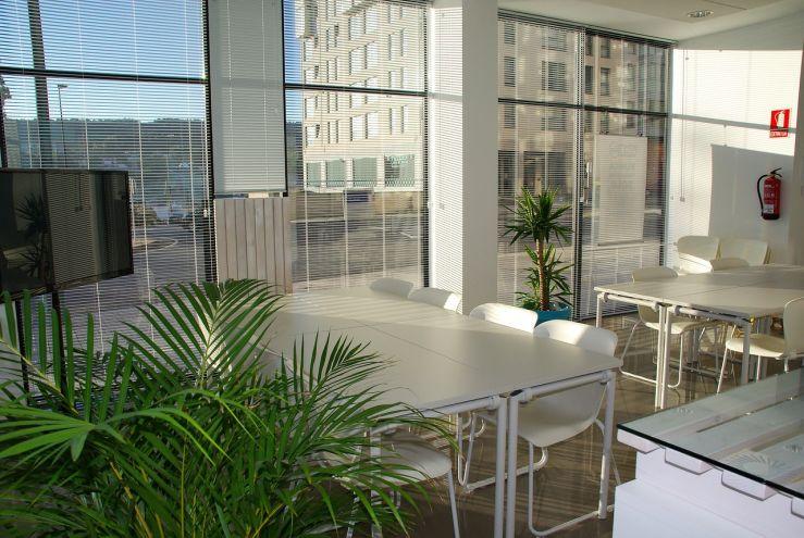 Grünes Büro – wie Pflanzen die Arbeit beeinflussen