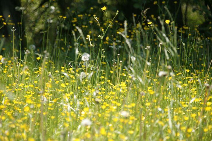 Pollen: Welche Pollen schon im März fliegen