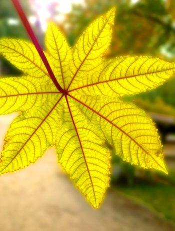 Achtung, tödlich: Die giftigsten Pflanzen der Welt!