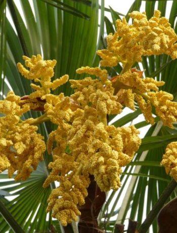 Tropische Pflanzen für deutsche Gärten: Diese Arten sind besonders robust
