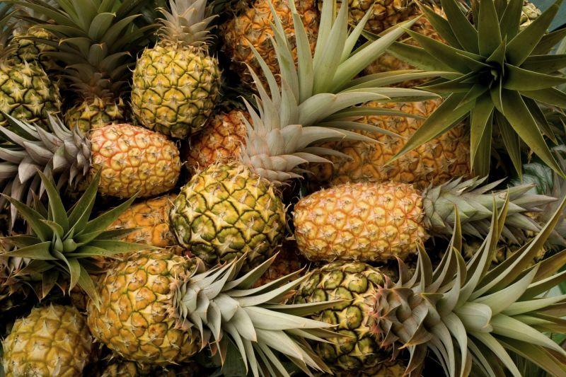 Am Anfang war der Strunk: Ananas selbst züchten