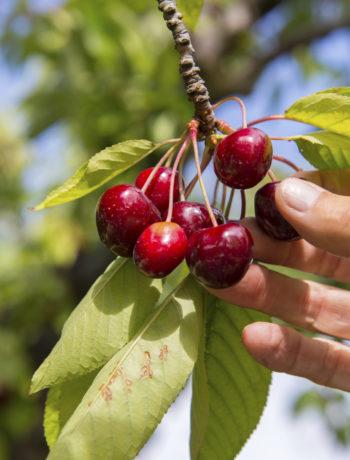 Hauptsache gut geerdet: Bäume richtig pflanzen
