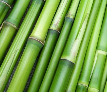 Bambus, der Sichtschutz mit Stiel, das ganze Jahr lang.